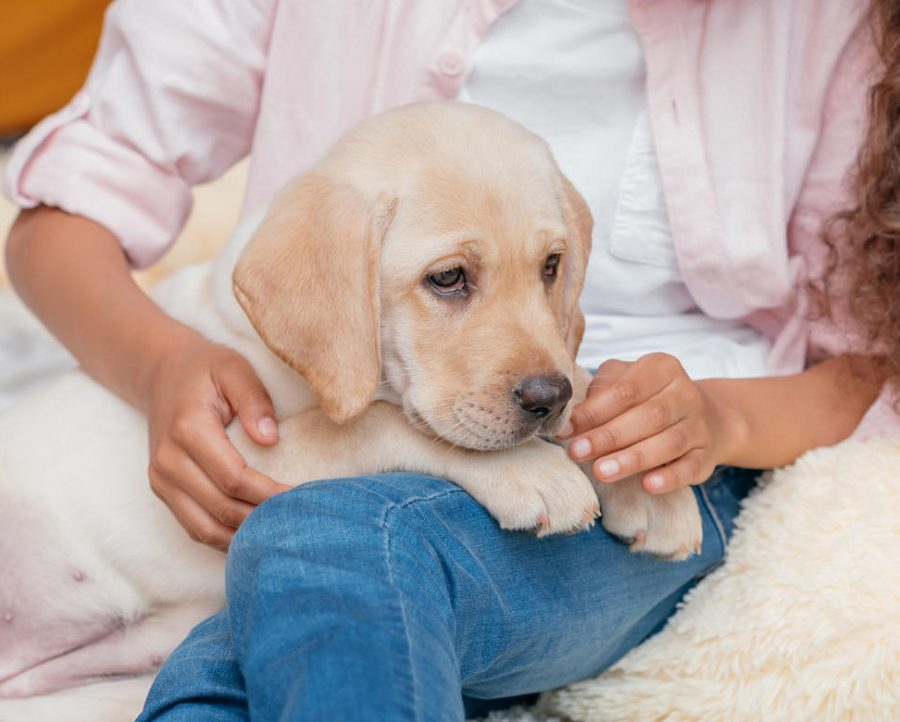 Pets and How They can Affect our Grades and Focus
